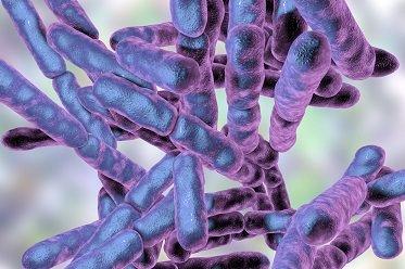 Bifidobakterien