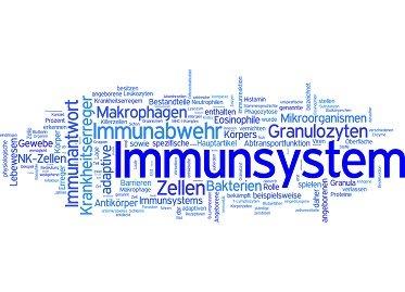 Die Wirkung von Probiotika auf das Immunsystem