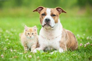 Probiotika für Hunde und Katzen